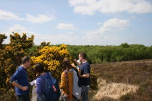 Super Foods Spring Foraging Workshop Offaly