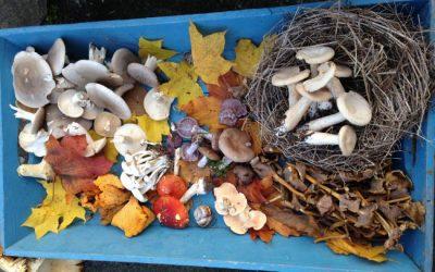 Mushroom Butter,