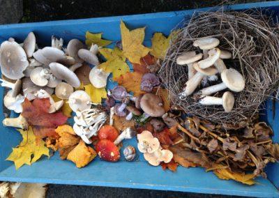 Tray_Mushrooms_650