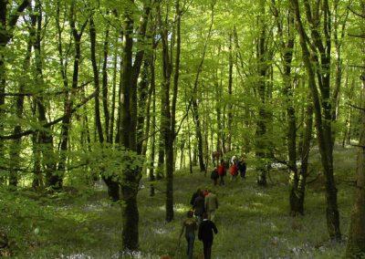 forestwalk_650x433