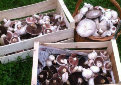 Mushroom_boxes_650x433