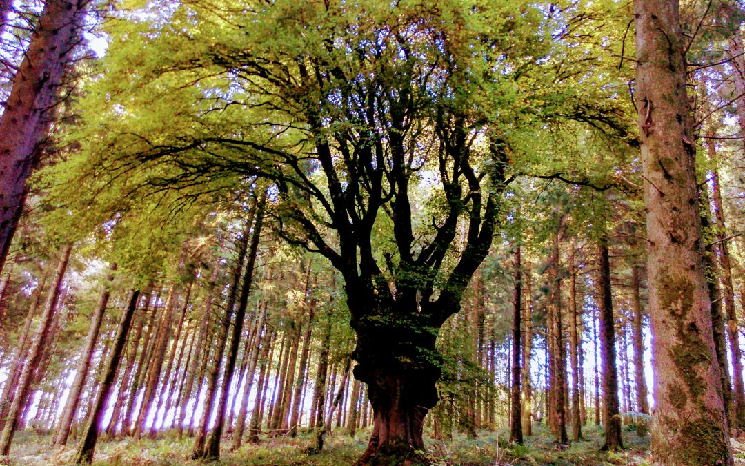 Retreat – Irish sacred trees – A Spiritual path